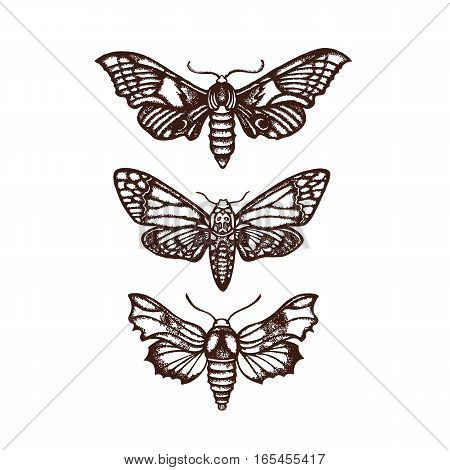 Moths. Sphingidae. Set, collection. Hand drawn. Vector illustration.