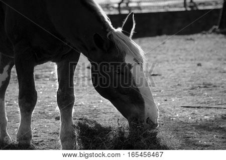 A horse out grazing in the late afternoon