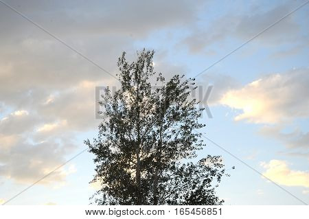 Overcast sky and trees displayed in nature outdoors.