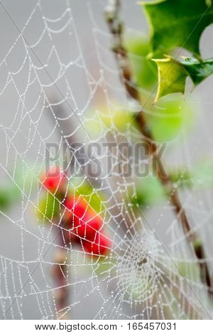 Morning dew drops on a spider web