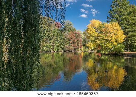 Autumn landscape with a pond, Central Park, NYC.