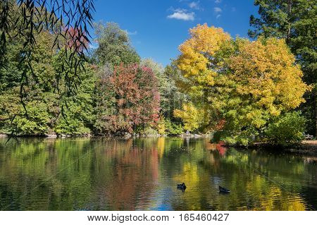 Autumn landscape with a pond in Central Park.