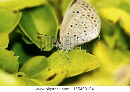 Clever tiny light brown colored butterfly on a leaf