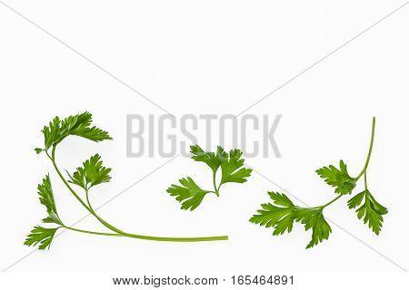 flat leaf parsley stalks isolated on white background