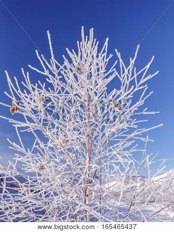 frozen winter forest on background of the blue sky