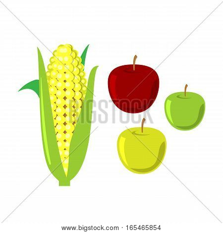 Corn cobs and apples on white background. Vector diet tasty pop. Maize agriculture healthy leaf yellow farm food. Harvest sweet husk kernels nutrition.