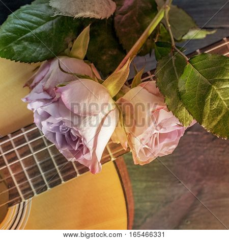 A square photo of a guitar neck with tender pink roses, on a dark wooden background with copyspace. Selective focus, toned photo