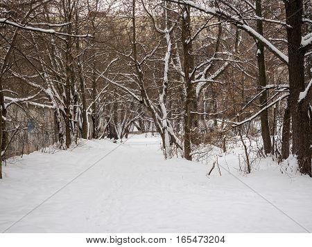 Track between the trees in winter after a snowfall.