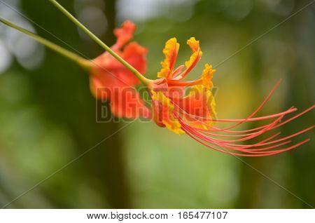 Exotic Tropical Flower Beautiful Orange Yellow Garden