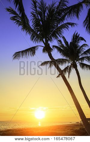 Sunset on the beach with coconut trees background