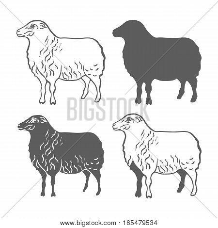 Domestic Animal Sheep Design Elements Vector Illustration