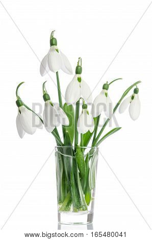 Bouquet Of Snowdrop Flowers In Glass Vase  Isolated On White Background