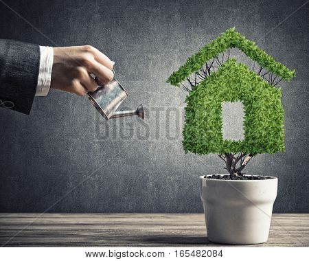 Hand of woman watering green plant in pot shaped like house