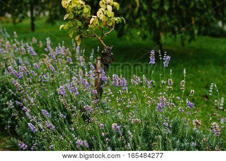 Lilac flowers. Beauty natural garden detali forest
