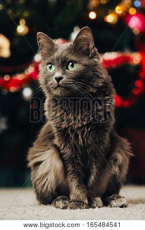 Gray cat on the background of the Christmas tree