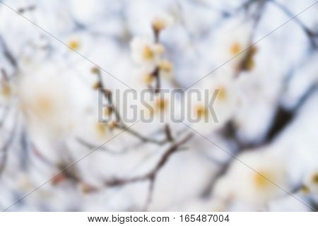 Beautiful Flowering Japanese Cherry - Sakura. Background With Flowers On A Spring Day.,blur