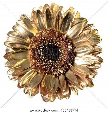 Daisy flower covered with golden paint isolated on white background by clipping path