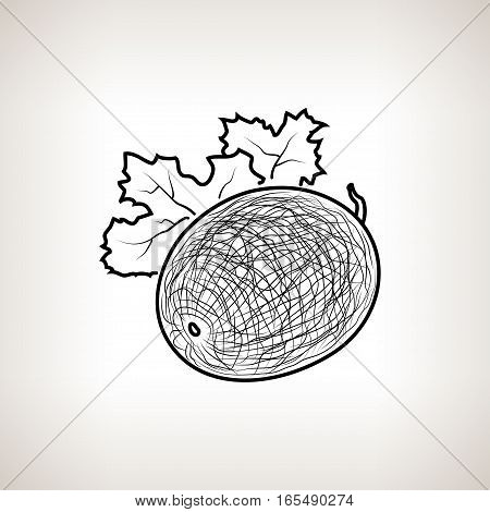 Melon, Image Melon in the Contours on a Light Background, Black and White Illustration