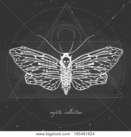 vector illustration with butterfly on a chalkboard, mystic illustration with dead head moth