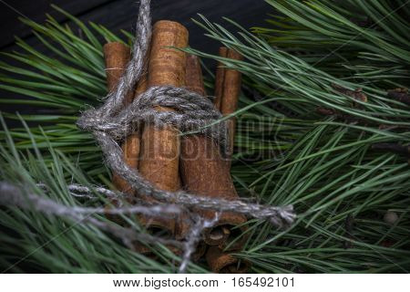 Christmas decoration with evergreen fir tree and cinnamon