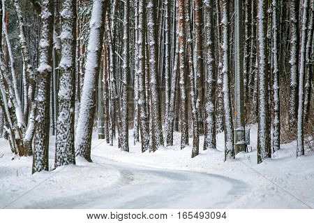 Scenic winter road through forest covered in snow after snowfall