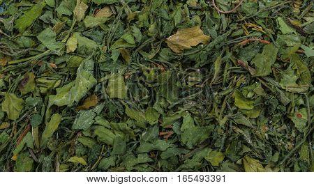 Raw Green Organic Dry Dill, close up
