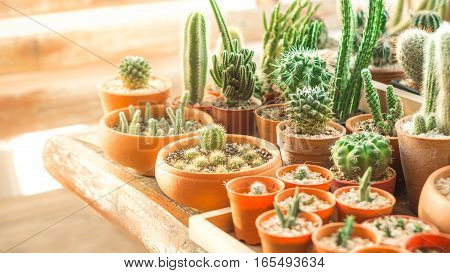 Cactus and house plants concept - Many cactus pots on wood shelf in house plants with flare light effect and copyspace