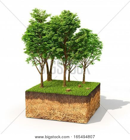 Eco concept. Cross section of ground with tall trees isolated on white. 3d illustration