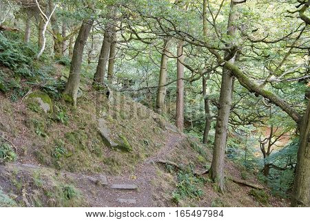 Woodland pathway, Padley Gorge, Peak District, UK