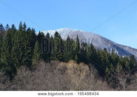 Winter in the Carpathian Mountains.  Here the Ciucas mountains peaks and pine forests.