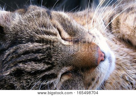Let sleeping cats lie. Close up of tabby cat face.