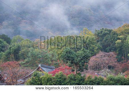 Nature view of Arashiyama in Autumn Kyoto Japan
