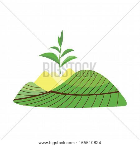 Tea plant green vector leaves isolated on white. Some field nature agriculture herb flat drink tree. Healthy morning garden asia plantation.