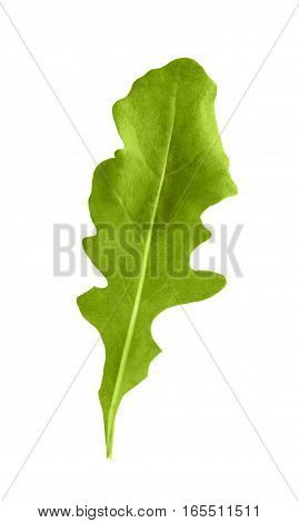 Arugula green herb leaf closeup isolated on white background. Studio image of spicy vegetable and herb, healthy natural organic food, cooking ingredient