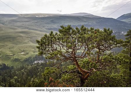 Landscape of mountain alpine meadow during rainy day