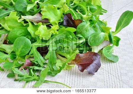 Fresh mixed greens leaf vegetables of arugula mesclun mache over kitchen towel