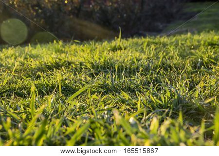 Green grass field surface texture under dusk sunlight