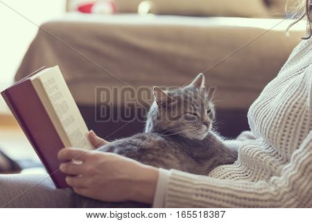 Soft cuddly tabby cat lying in its owner's lap enjoying and purring while the owner is reading a book. Focus on the cat; warm cozy domestic atmosphere selective focus