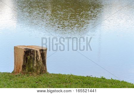 Cut Tree Trunk To Serve As A Bench To Sit In Front Of The Lake.