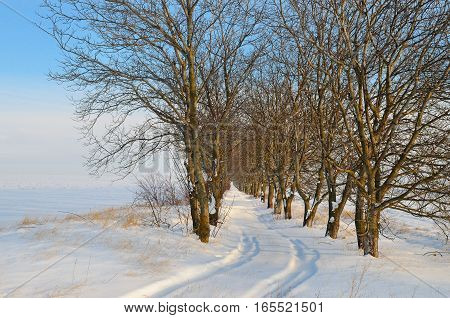 snow-covered field and trees in the snow on a background of blue sky