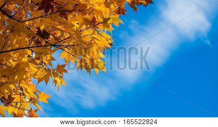 Autumn Leaves Of Maple With Blue Sky And Copy Space