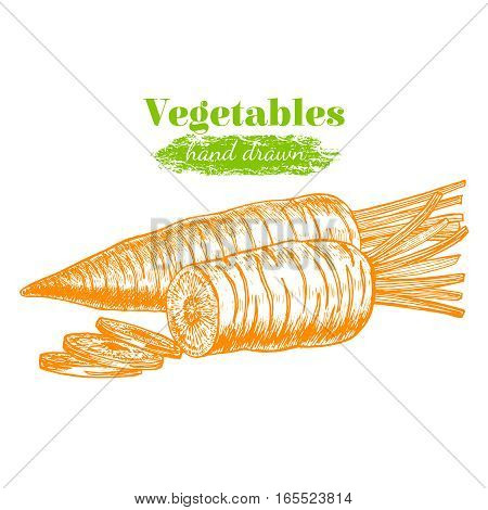 Carrot and Slice Hand Draw Sketch Organic Food Can Be Used For Restaurant Menu. Vector illustration