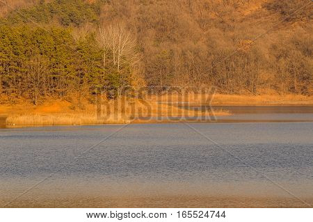 Landscape of a forest and shore of a lake with green and gold colors