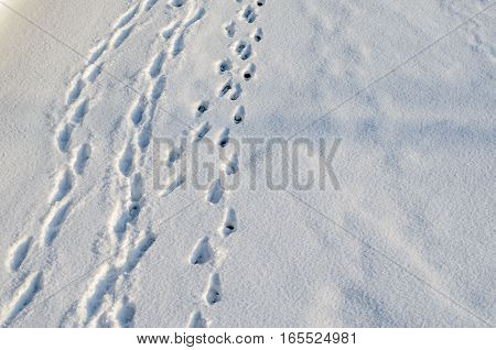 Human Footprints in snow. A pioneer concept