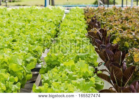 Growing organic vegetables without soil in garden.