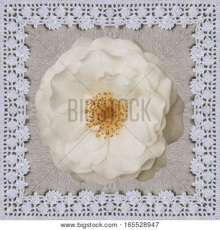 White rose on the linen cloth with Crochet frame. Handmade Collage background for Valentines day