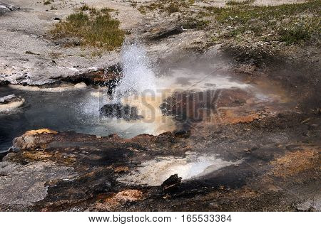 Young Hopeful Geyser  at Yellowstone National Park.