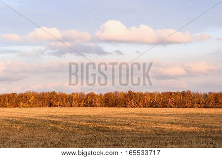 Newly cut autumn wheat field in a village in Moldova at purple sunset, golden forest
