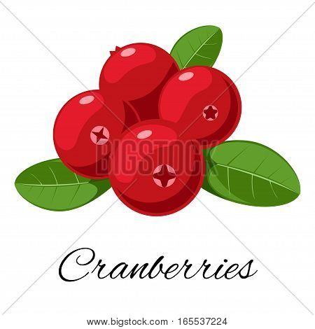 Cranberries isolated icon. Vector illustration for your design. for pattern, badge, label, textile etc