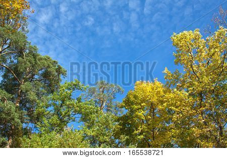 Indian summer landscape with trees in autumn forest under blue sky and high clouds